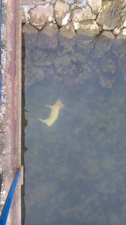 Nečuveno! Reka kao izvor zarare!!! (FOTO)