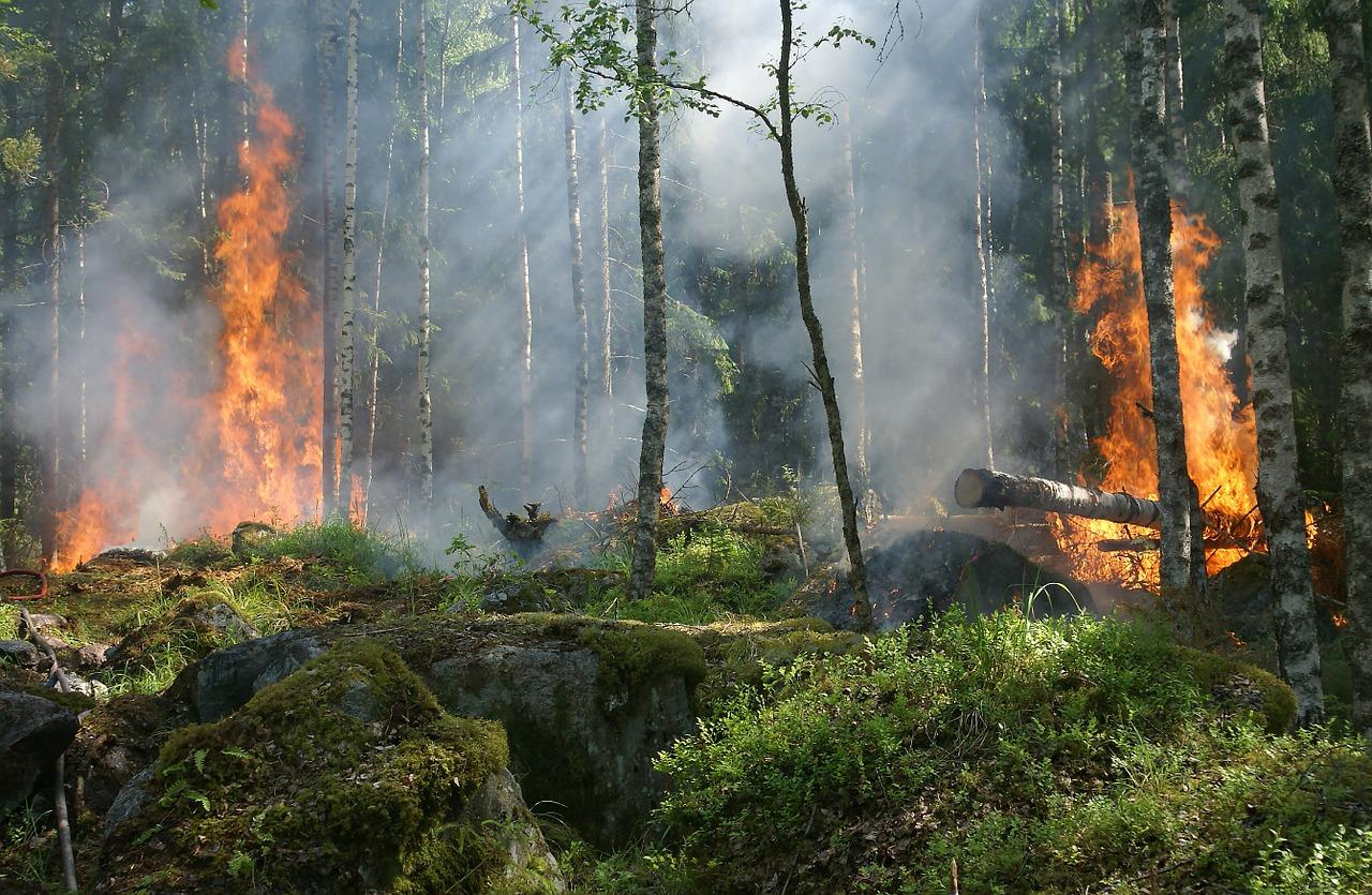 Veliki požar na Svrljiškim planinama