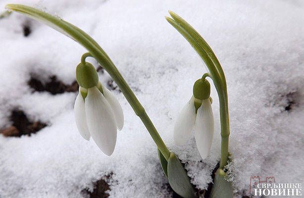 Foto vest: Zima posle proleća