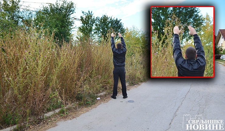Foto info: Šiblje i grmlje preko 2 m