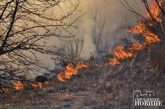 Požari širom Svrljiga