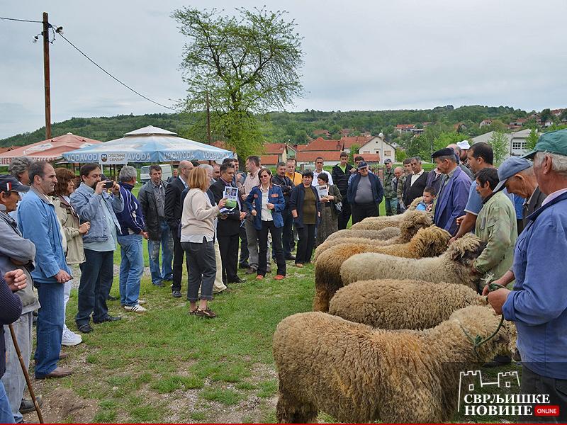 Tradicionalna izložba ovaca i sira