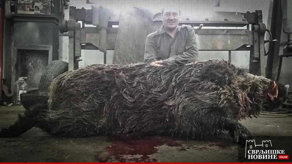 Majstor odstrelio vepra od 150 kg