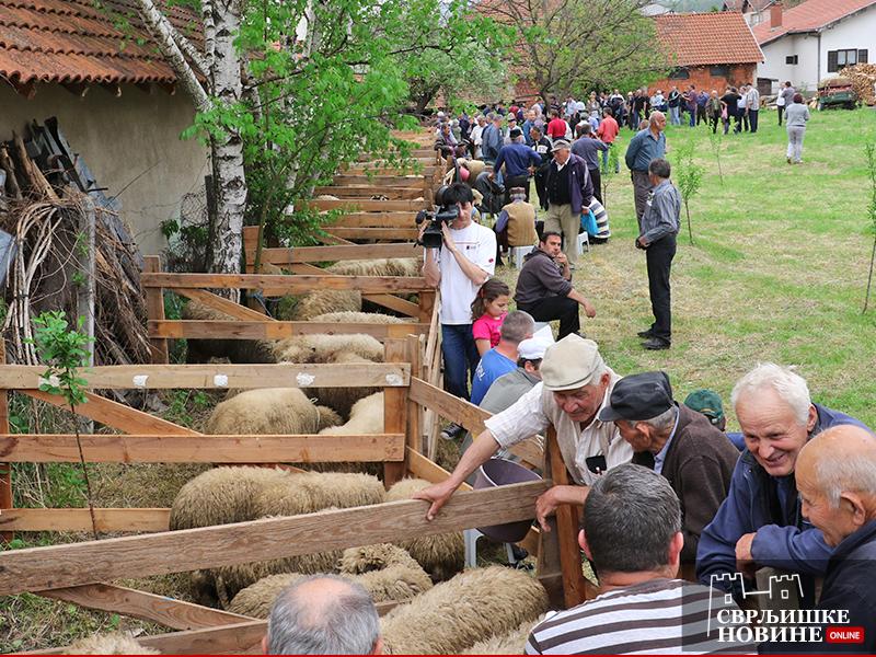U Svrljigu se održava 21. opštinska izložba ovaca