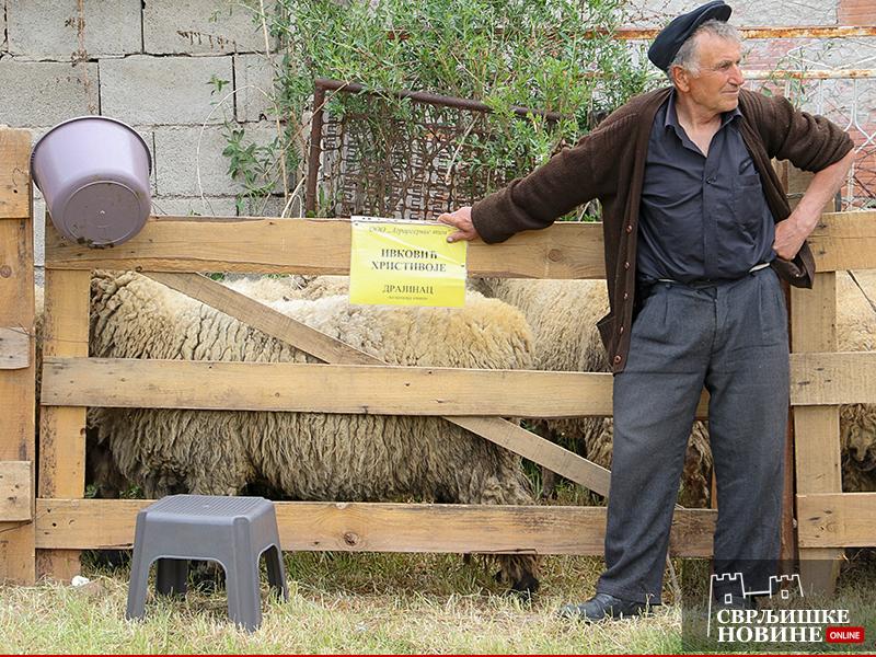 """XIX Opštinska izložba ovaca """"Svrljig 2015"""""""