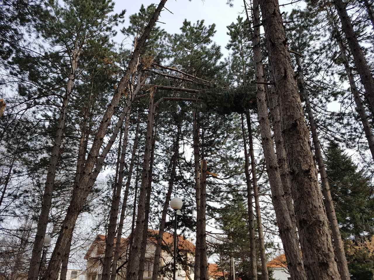 PAZI GLAVU: Pucaju stabla u gradskom parku