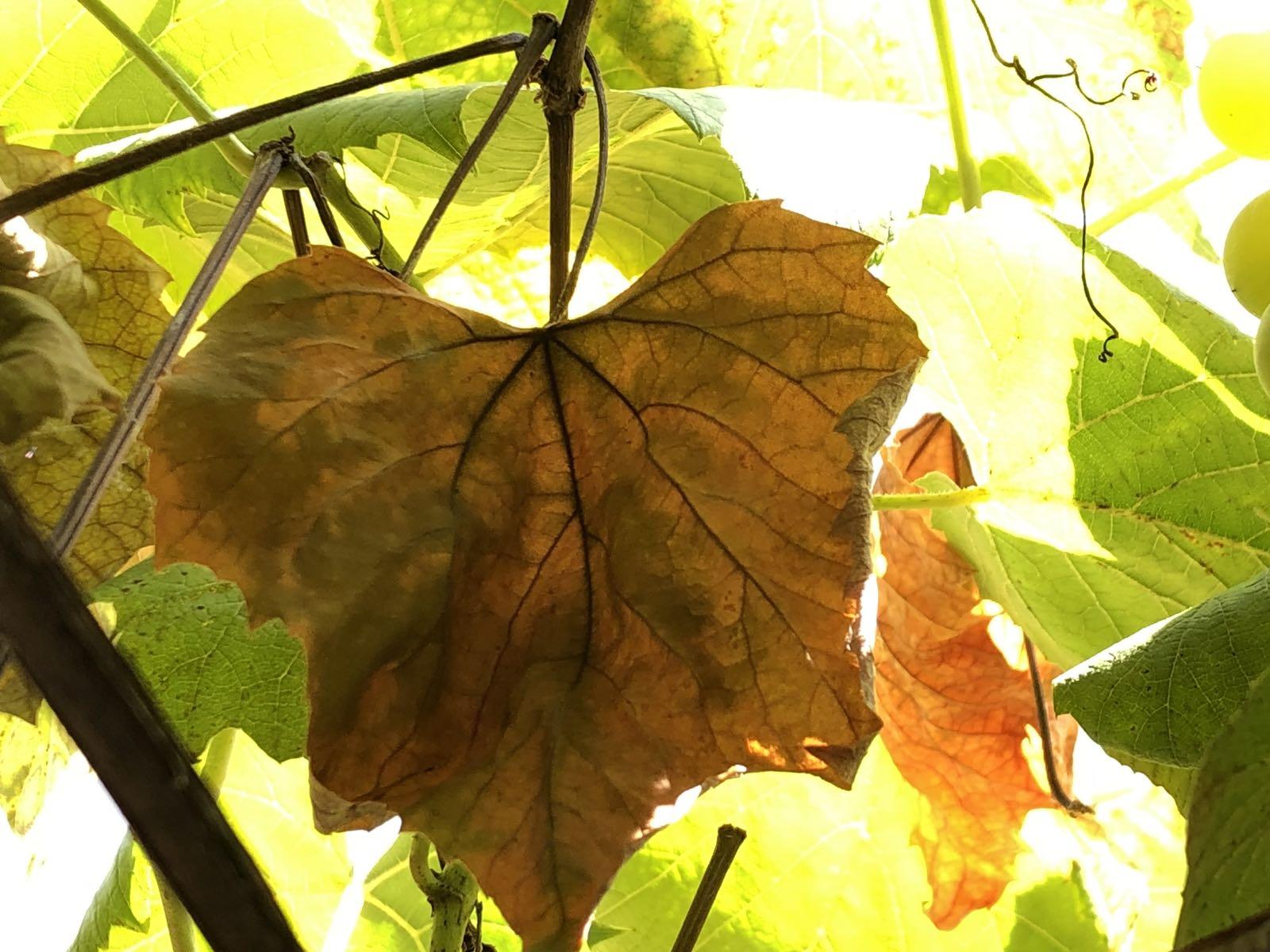Jesenji dani, foto: M.M.