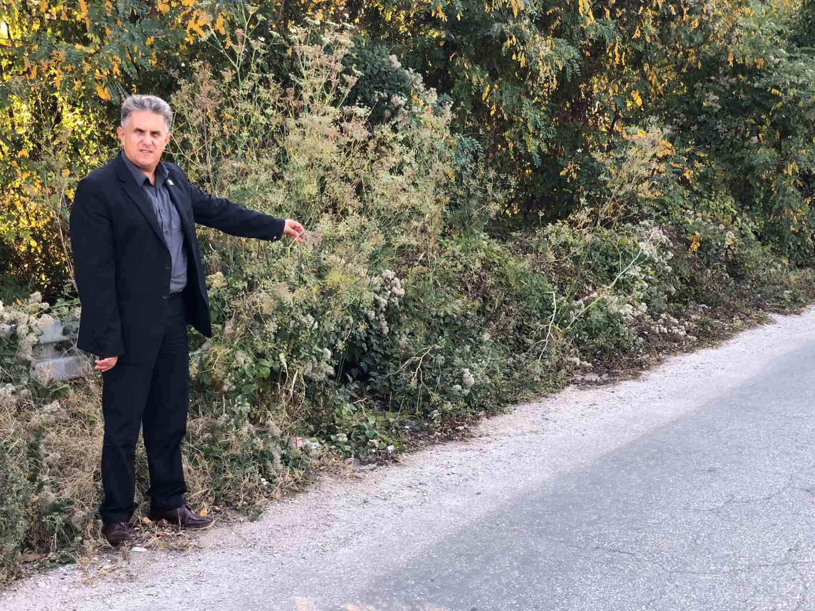 Šiblje i grmlje pored puta, foto: M.M.