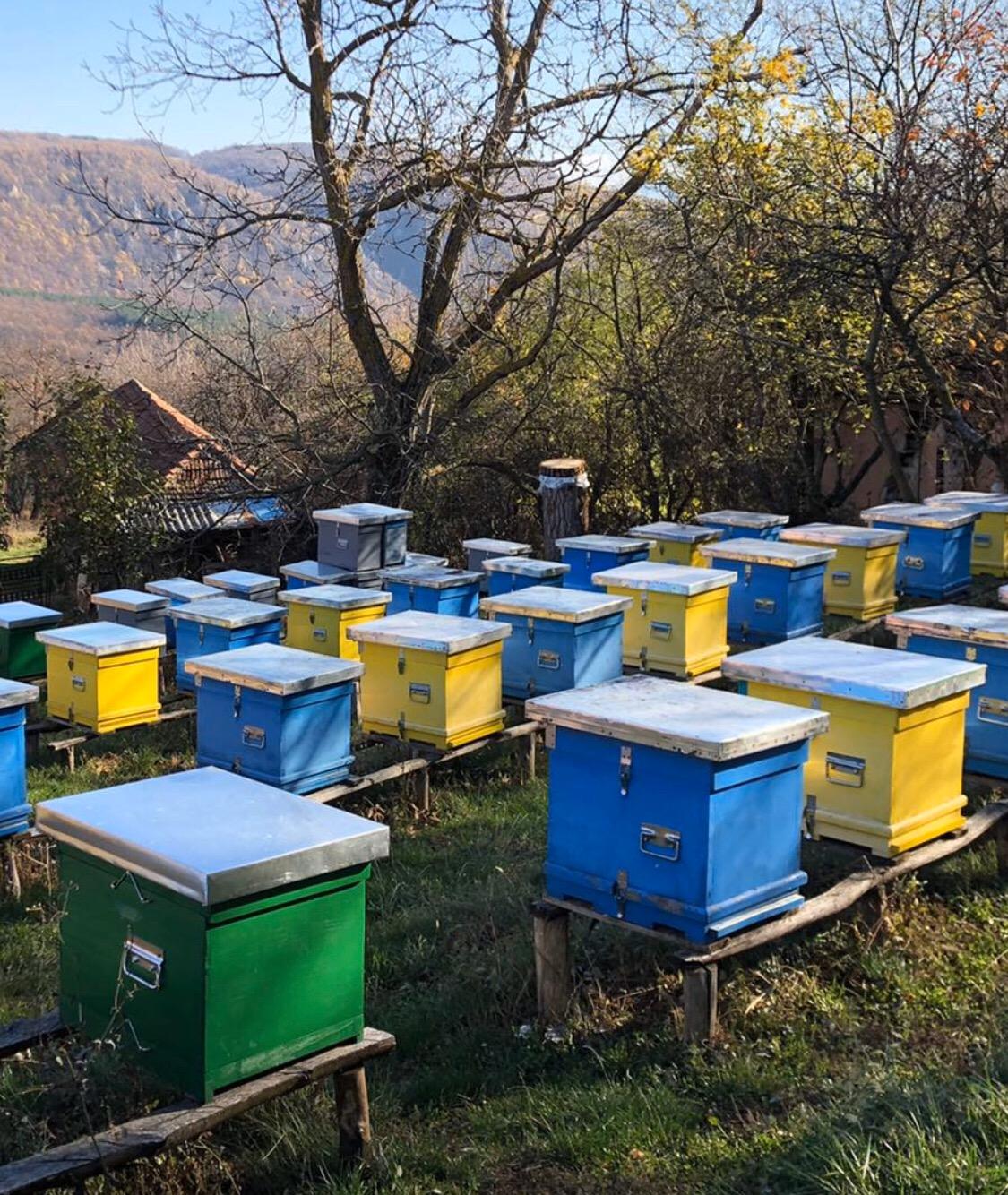 Pčelarstvo, košnice, foto: M.M.