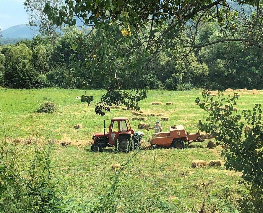 Poljoprivreda, foto: Svrljiške novine