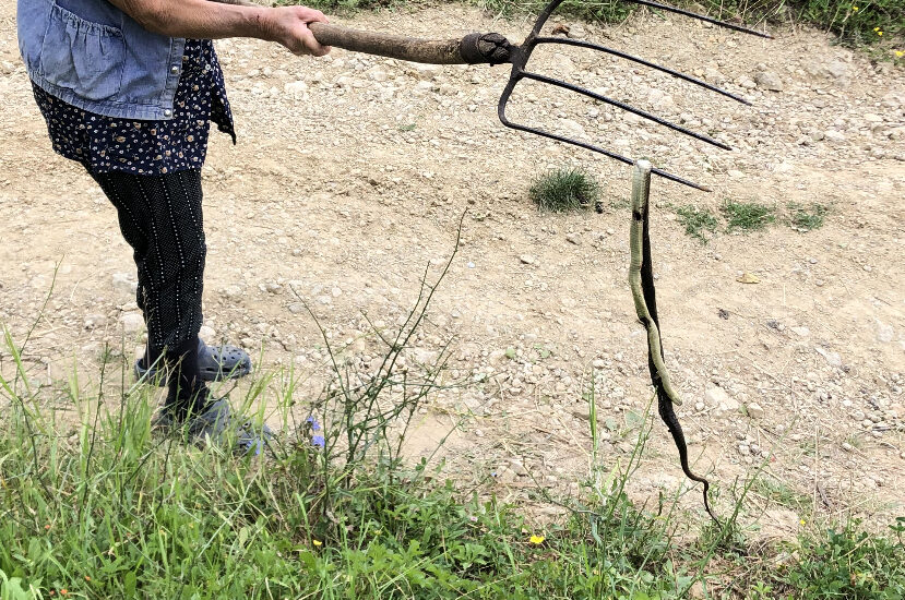 Ubijena zmija ispred ulaznih vrata, foto: M. M.