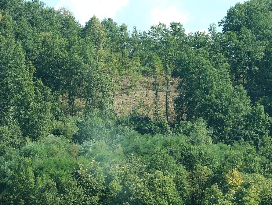 Seča šuma u svrljiškom kraju, foto: Redakcija