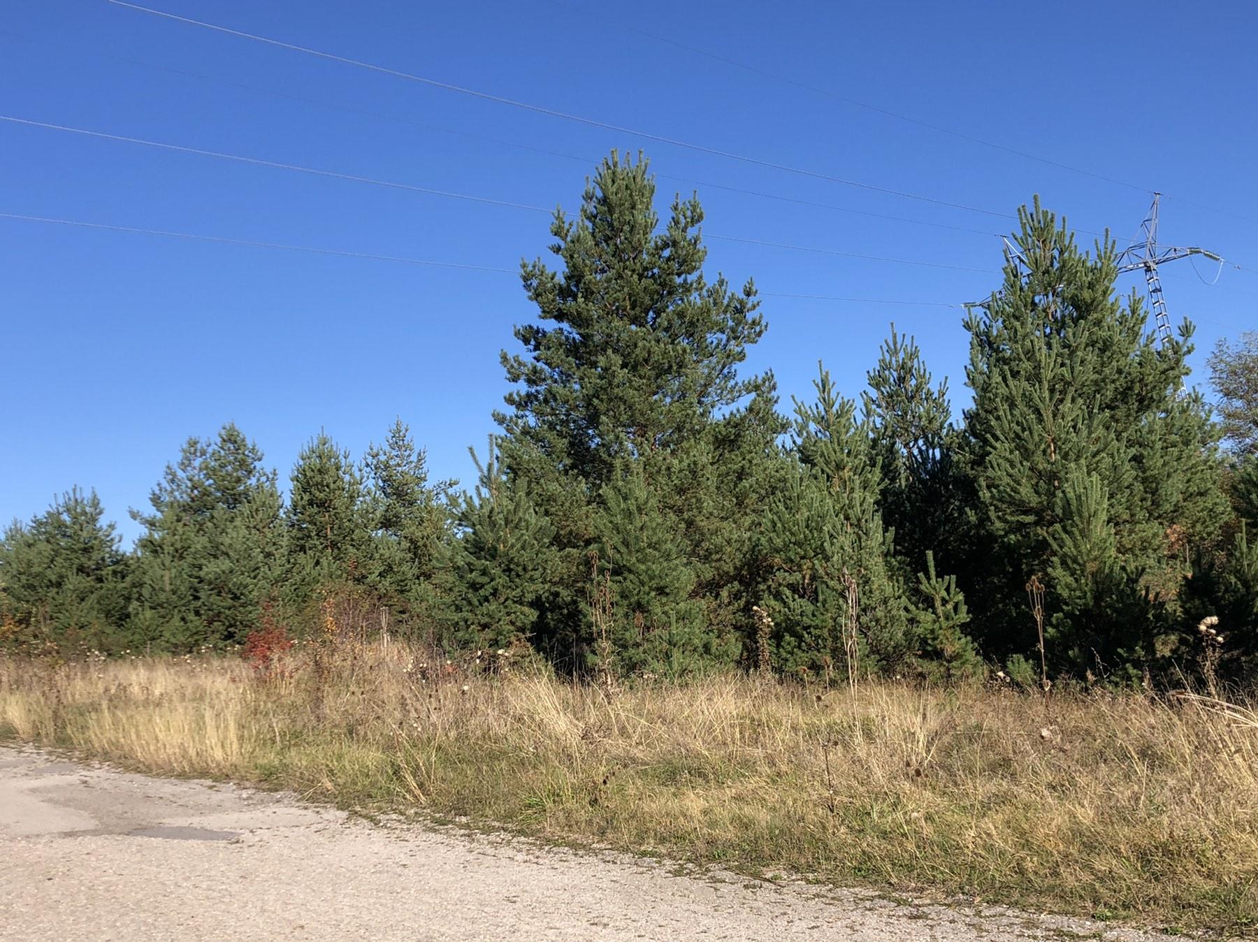 Šuma, foto: D.M.