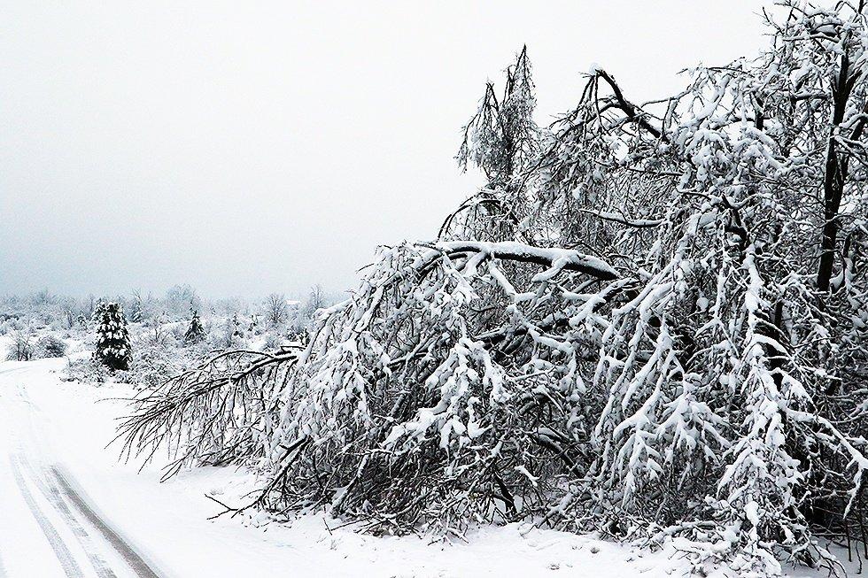 Sneg u svrljiškom kraju, foto: Svrljiške novine, M.S.