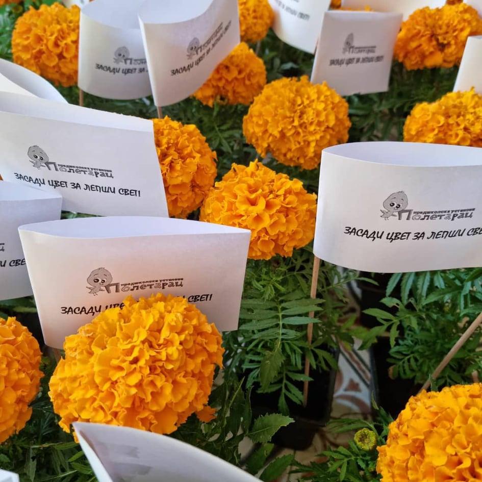 Podela cveća, foto: Eko-budućnost