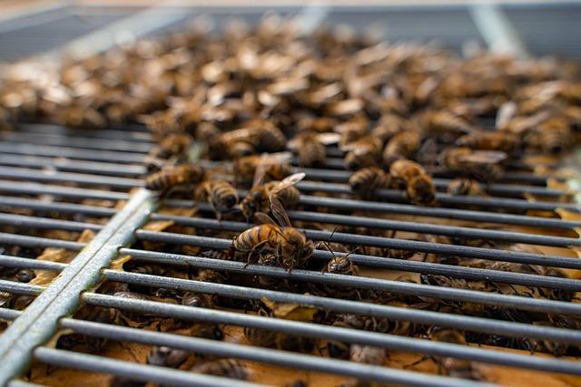 Ilustracija, pčele, foto: pixabay, autor: Thorsten Frenzel