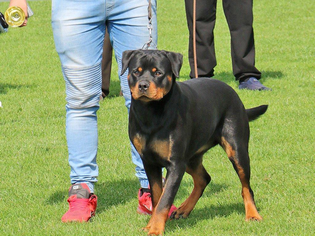 Sutra se održava Nacionalna izložba pasa u Svrljigu