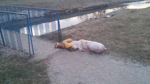 NEVEROVATNO! Bacio mrtvu životinju pored reke?