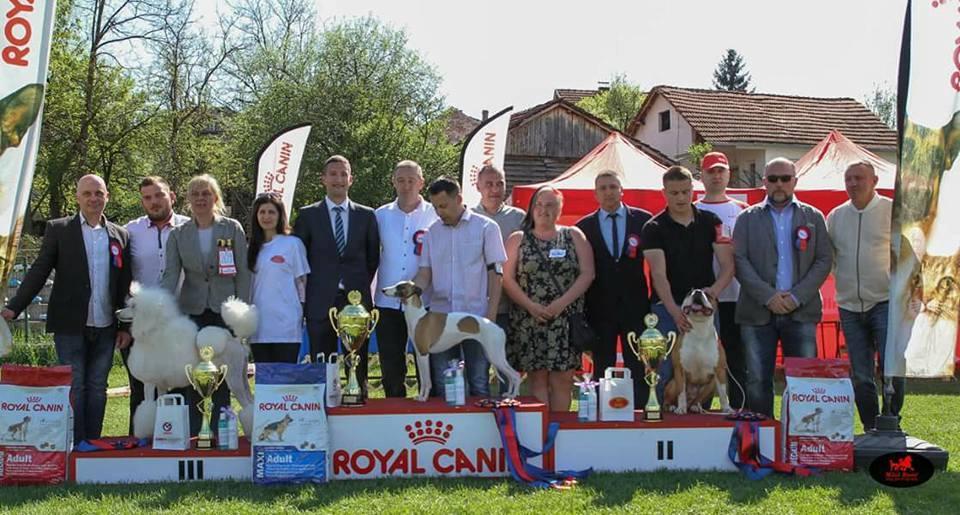 KD ESFERLIG: Održana Nacionalna izložba pasa u Svrjigu