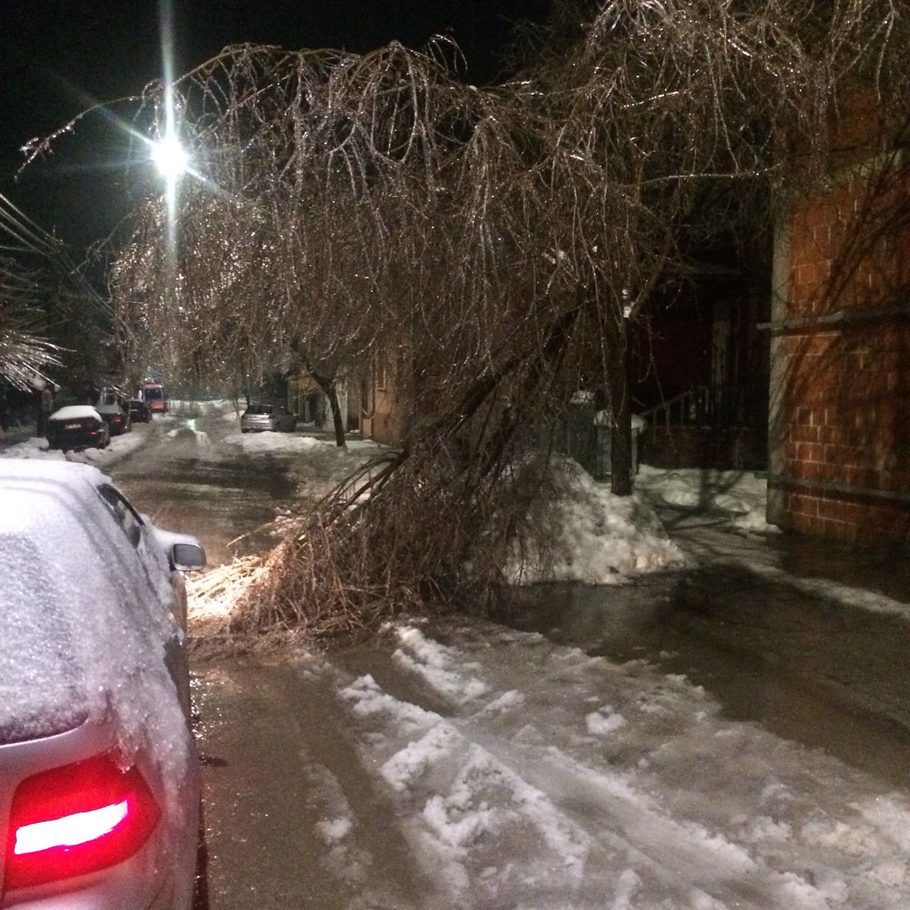 OPREZ! Od težine leda puklo drvo u Hadžićevoj ulici (FOTO)