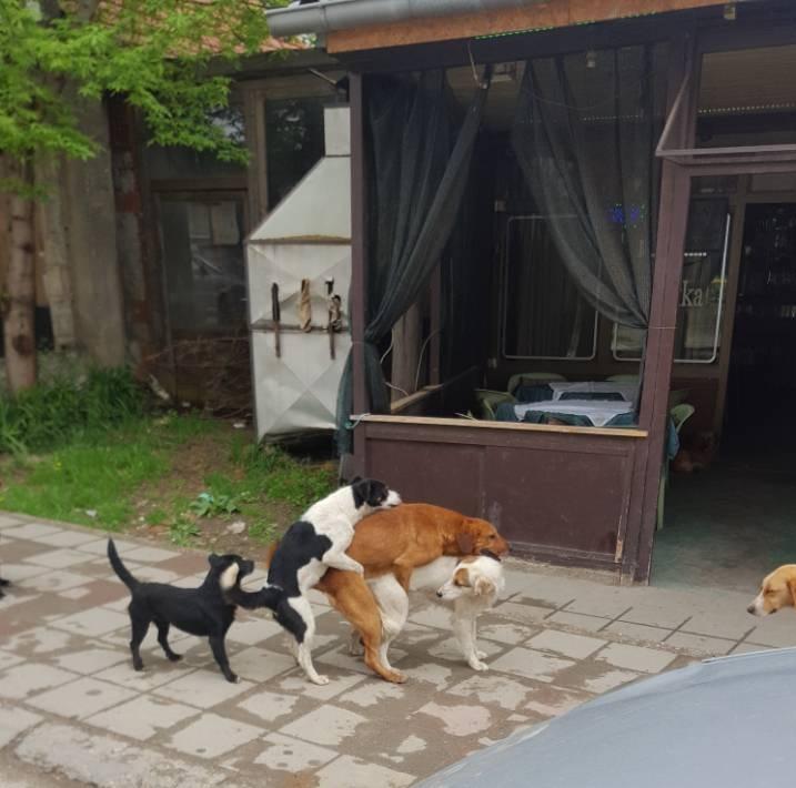 FOTO DANA: Psi na gomili…