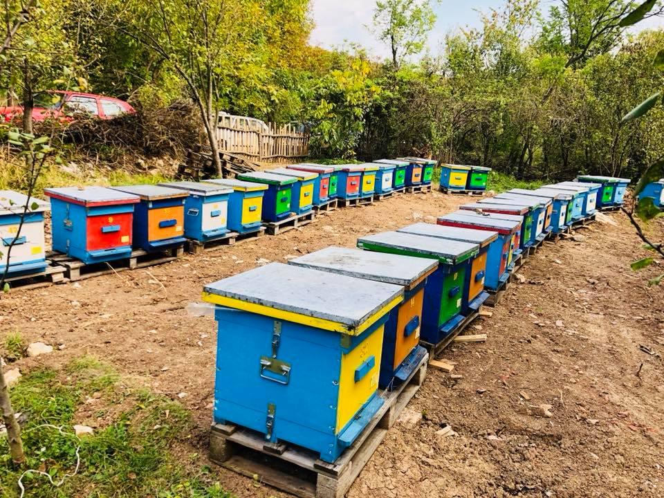 Svrljiški pčelari na imanju Matejića u Plužini obeležli pčelarsku slavu 2