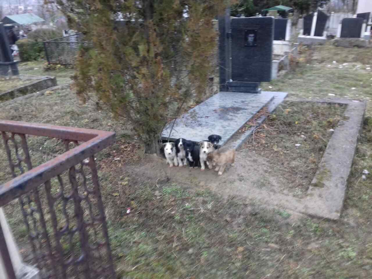 FOTO PRIČA: Spas od zime našli ispod groba! (FOTO)
