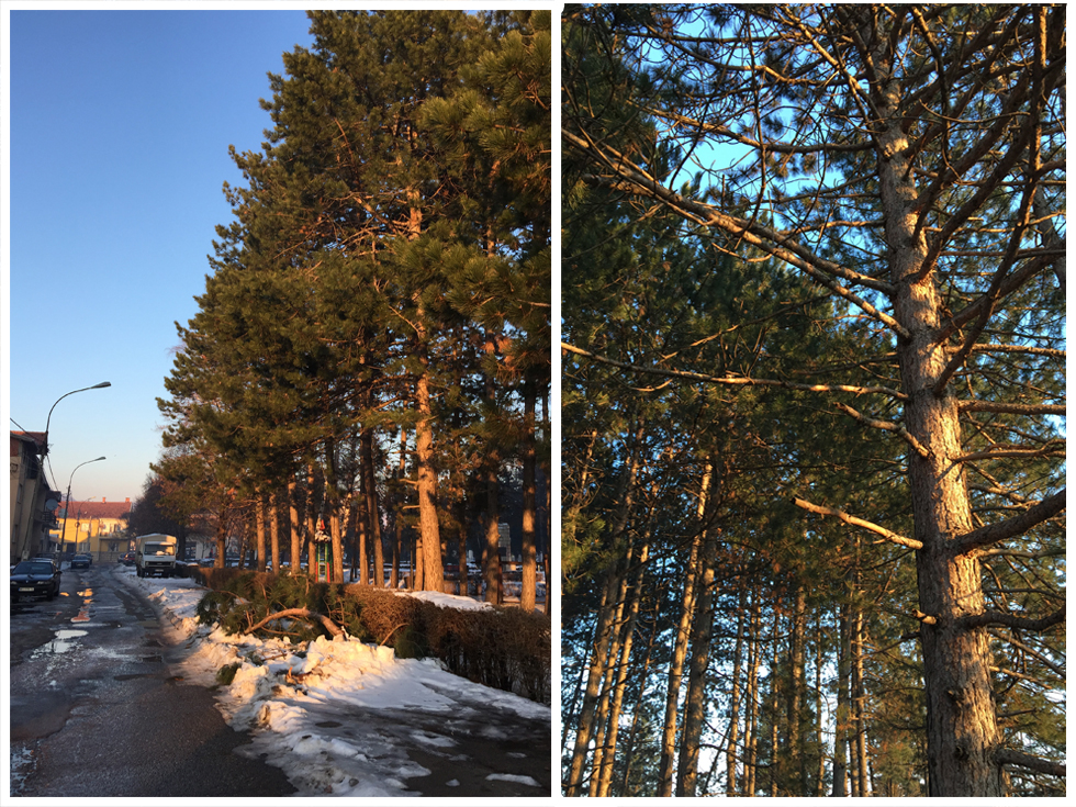 park drvo