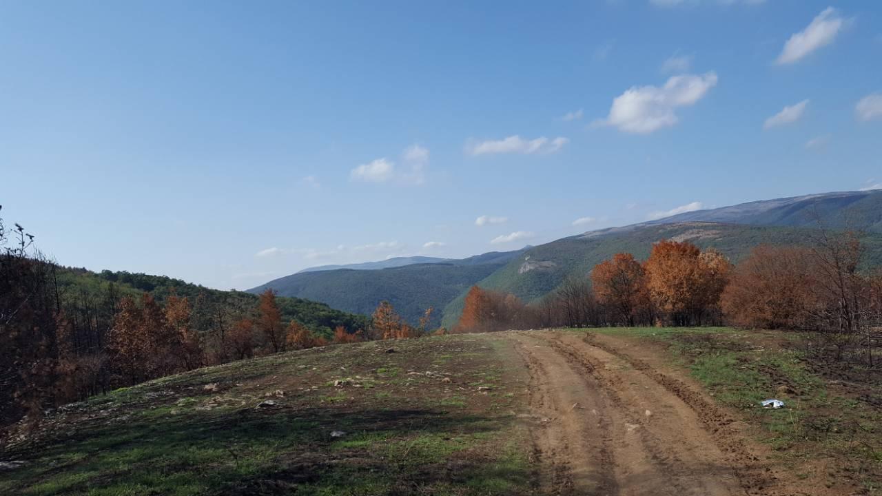 Staza na teritoriji Svrljiga, foto: S.M.