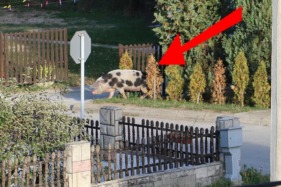 Pijatrenka upala u boks za pse u jednom dvorištu, foto: M. Miladinović